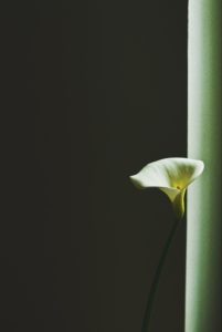 forgiveness - flower